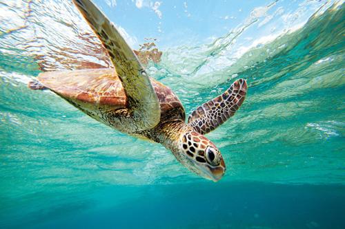 turtle-lelliot